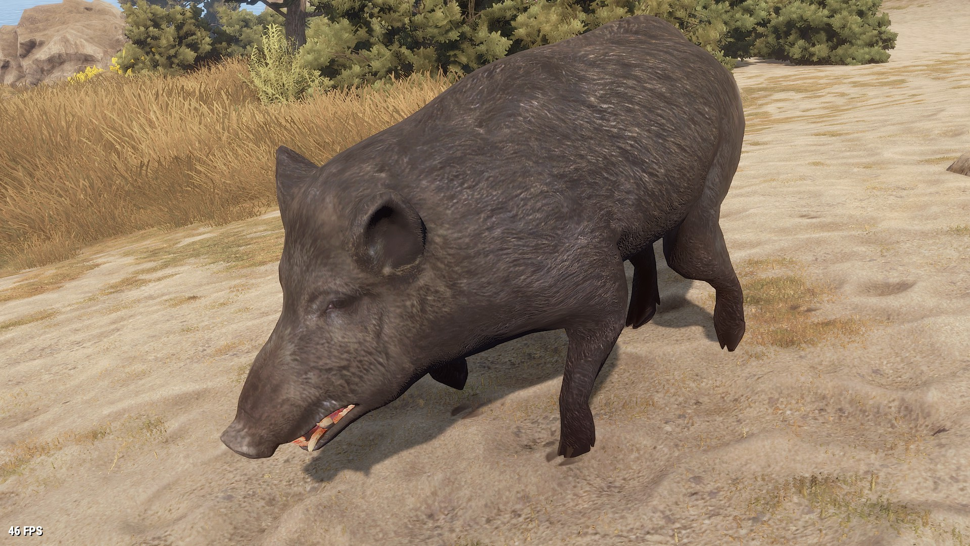 boar rust wiki fandom powered by wikia