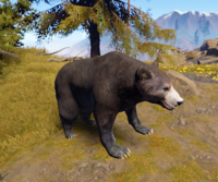 Bear new