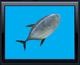 Fishycon