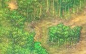 Las Bambusowy 01 (DBK Saiyajin raishū)