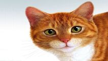 Cats-wallpapers-3-4
