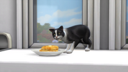 Kot jedzący ze stołu