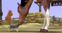 The sims 3 Cat & Horse