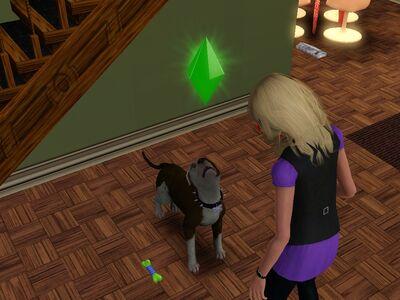Pies znudzony tresurą