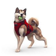TS4 dog active
