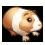 Small pet - Guinea Pig