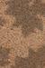 Beach Sand Habitat
