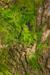 Mossy Trunk Habitat