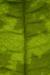 Macro Leaf Habitat