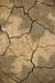 Cracked Earth Habitat