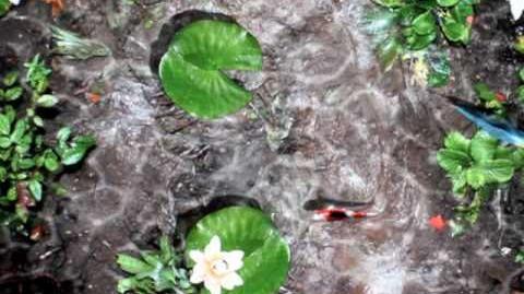 Pocket Pond HD.mov
