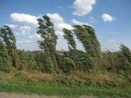Ветер сильный