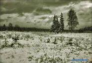 Зима (5)