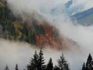 Туман (1)