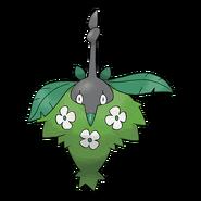Burmadame Pflanze