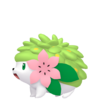 Shaymin Home