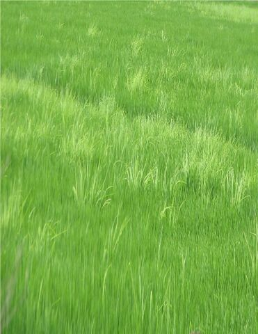 File:Field.jpg