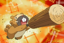 Bidoof (An unknown co-ordinator)