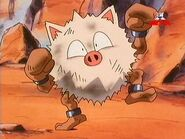 Primeape Take the Count