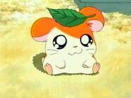 Hamtaro (7)