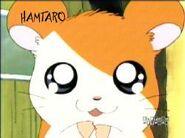 Hamtaro (2)