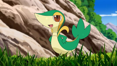 1000px-Ash's Snivy