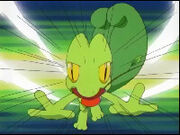 Ash's Sceptile as a Treecko using Quick Attack