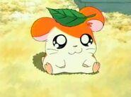 Hamtaro (6)