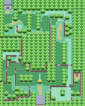 5. Forest Map