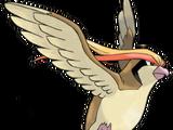 018 - Pidgeot