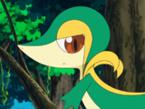 BW007: Snivy Plays Hard to Catch!