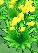 XY 노란색 꽃밭