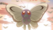 Ash Butterfree BW130