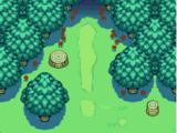괴상한 숲
