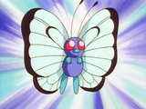 Butterfree (anime)