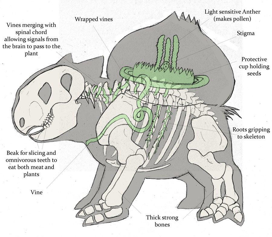 Image - How-Bulbasaur-works-pokemon-anatomy-venusaur-pikachu ...