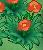 XY 빨간색 꽃밭