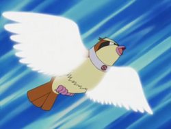 Trainer School Pidgey Wing Attack