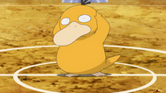 Misty Psyduck anime
