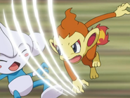 Ash Chimchar Scratch