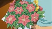 그라시데아꽃 부케