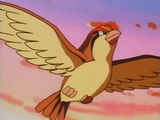 Ash Pidgeot