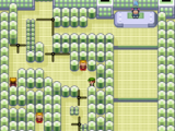 Fortree City Gym