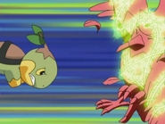 Gardenia Turtwig Tackle