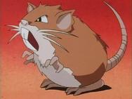 Ash Raticate