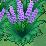 XY 보라색 꽃밭
