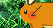 칼로스지방의 야생 포켓몬