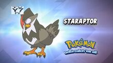 Staraptor- Who's That Pokémon