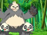 XY011: Het Bamboewoeste Bos!