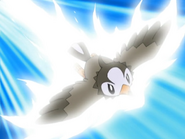 Ash Starly Quick Attack